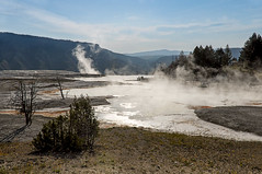 CANARY SPRING (bydamanti) Tags: mountains unitedstates yellowstonenationalpark yellowstone wyoming geysers usnationalparksandplaces usnationalparks canaryspring nationalparkphotography travellinglens yellowstonevalleysandviews nationalparksnationalmonuments