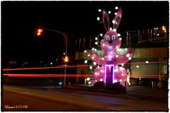 Biella & Bunny (Luca131313) Tags: street bunny moving strada rosa luci biella notte dx esposizione pasqua coniglio 18105 lungaesposizione scie scieluminose nikond5100 luca131313