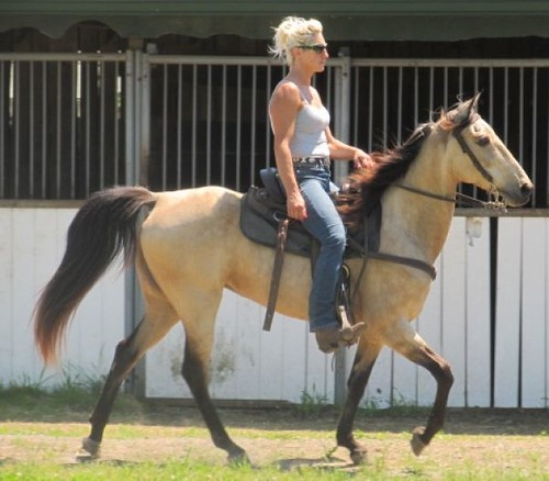 Beautiful  Buckskin TWH Gaited Mare