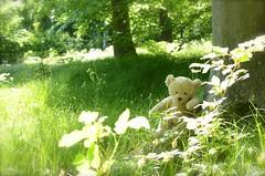 Wilde Baren... (Lenekie) Tags: bear toy teddy curly teddybear build leni buildabear bar teddybar krausebar krauserbar