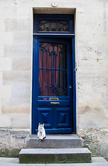 The Janitor (Jeluba) Tags: door france cat canon chat janitor saintemilion