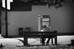 Man On Bench (plainfacedproductions) Tags: park street blackandwhite bw white black tree bird feeding pentax homeless sydney australia pidgeon k01 rokinon
