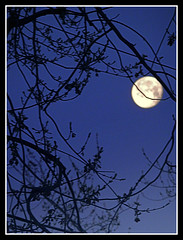 Moon Shot - Photo by STEVEN CHATEAUNEUF - April 26, 2013 (snc145) Tags: sky moon nature night skyscape outdoors photography evening photo spring seasons photos dusk nighttime digitalcamera treebranches flickraward stevenchateauneuf ringexcellence olympussz14 april262013