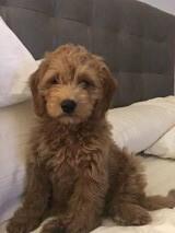 Gretta's little boy Harry!