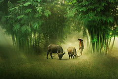 this life enough for me ((ID's)) Tags: people nature buffalo bambos green fineart artwork light flickrunitedaward