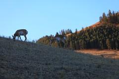 IMG_0037 (GOD WEISFLOK) Tags: montana wyoming usa yellowstonepark gordweisflock weisflock