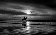 The sea cowboy  B&W (Lior. L) Tags: theseacowboy bw sea cowboy beach monochrome blackandwhite blackwhite silhouette horseman horse landscape telaviv telavivbeach reflection clouds sunset israel surreal surrealistic