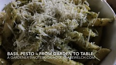 Basil Pesto: From Garden to Table  A Gardeners Notebook [Video] (2:00) - Click through to my profile to watch the video #garden #food #pesto #pasta #basil #recipe #cook #cooking #gardenersnotebook (dewelch) Tags: ifttt instagram basil pesto from garden table  a gardeners notebook video 200 click through profile watch food pasta recipe cook cooking gardenersnotebook