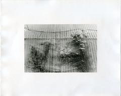 (?) Tags: darkroomprint ilford cooltone fiber