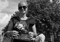 Dog's Life (Straatmoment) Tags: amsterdam nieuwmarkt straatfotografie streetphotography nederland netherlands holland mensen people straatmoment hansstellingwerf portret portrait hond dog
