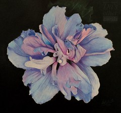 Hibiscus [in Explore] (da's art) Tags: craftsyclass hibiscus flower derwentdrawing luminance polychromos coloredpencils traditionalart drawing