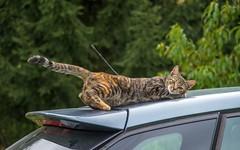 Kitty (56) (Vlado Fereni) Tags: kitty kittens cats catsdogs animals animalplanet zagorje hrvatska hrvatskozagorje croatia nikond600 nikon2485284