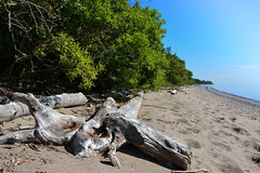 Beach Drift Wood (dunescape) Tags: toronto lakeontario scarboroughbluffs driftwood