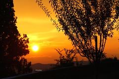 Cielo rosso (Daphne135) Tags: pienza sunset tramonto red rosso sole piante suggestivo romantico