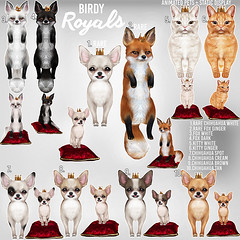 Birdy - Royals - The Arcade (Dani @ Birdy/Foxes/Alchemy) Tags: sl second life pets pet fox foxes chihuahua puppy dog kitty cat mao animated arcade event gacha birdy