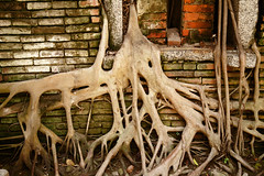Nature reclaims (Peter J Brent) Tags: tainan taiwan anpingoldtaitandco treehouse banyantree