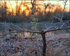 2014-10-02 Kiev Rus, Ukraine (Yuriy Sanin) Tags: wistasp colour symmar13556 velvia50 trees bushes river sun surprised frost  rime   leaves  yuriy sanin landscape       4x5