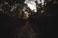 _DSC9462 (CassinStacy) Tags: forest florida woodlands night dusk sky clarity spooky dark scary evening radio tower