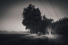 The next path (lutzheidbrink) Tags: black white blackandwhite dark light shadow nikon d5000 nature landscape naturephotography
