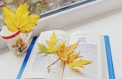 Cosy autumn everyone! ( ) Tags: fall fallinlove autumn october days reading spread love season soul passion canon cozy