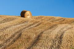 The Hay Roll, near Onoway, Alberta [Explored] (WherezJeff) Tags: landscape ruralscene agriculture autumn bluesky field harvest harvesting hay hayroll hill morning solo straw onoway alberta canada ca