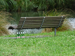 A Lazy Afternoon (Steve Taylor (Photography)) Tags: avon river lager stellaartois bottle seat bench green wood metal newzealand nz southisland canterbury christchurch hagleypark summer booze