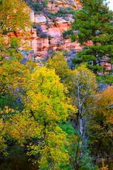 Starting to Turn (Carl Cohen_Pics) Tags: fall fallcolors leaves trees westforktrail coconino coconinonationalforest foliage forest autumn outdoorbeauty nature sedona arizona canon
