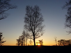 Sunset . (presteza777) Tags: sunset sky sun tramonto puestadelsol coucherdusoleil stpeterburg russia peterhof samsung autumn trees