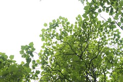 (Karsten Fatur) Tags: plant tree green nature sky europe berlin travel adventure explore germany light