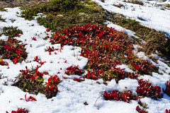 IMG_2376 Vinteren nrmer seg. (JarleB) Tags: winter autumn vinter hst mountain fjell rldal haukelifjell hordaland haukeli austmannatjrna blbergdalen