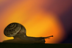 Time and Patience (Rickydavid) Tags: snail lumaca macro