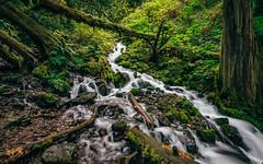 All The World Is Green (Pedalhead'71) Tags: wahkeenacreek columbiarivergorge oregon corbett unitedstates us river creek landscape