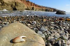 The Claw (Forklift Luke) Tags: tidepools sandiego claw crab beach ocean water rocks