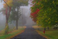 Autumn is here (Timur Dzhambinov) Tags: pentax k1 autumn colors fog morning