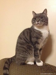 [Reunited] Sun, Oct 16th, 2016 Lost Male Cat - Vernon Grove, Rathgar, Dublin 6 (Lost and Found Pets Ireland) Tags: lostcatvernongrovedublin lost cat vernon grove dublin october 2016