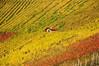 The Lonely Cottage (Habub3) Tags: travel holiday germany deutschland vineyard search reisen nikon urlaub cottage haus lonely vacanze weinberg d300 serach 2013 weinstadt habub3