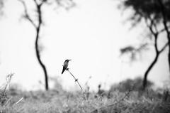 Lonely Shelter (Dilwar Mandal) Tags: trees india birds nikon village nikkor shelter westbengal villege murshidabad d5100