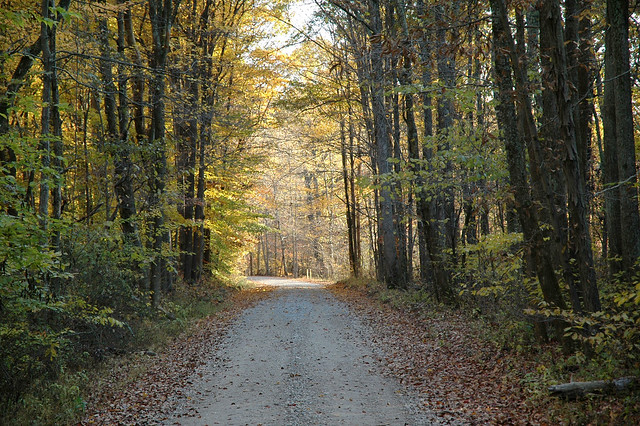 Yellowwood State Forest - October 2005