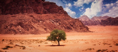 Tamarisk Tree (madcityfinearts) Tags: jordan wadirum bedouin desert cliffs sand sandstone landscape travel