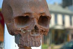 Cobwebs and Cranium (MTSOfan) Tags: skull newhope