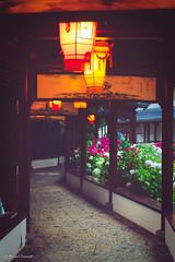 La cit des immortels (Framed Memories) Tags: china pairi daiza edited lampion lamp cross effect