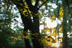 Belonging to the Light (linda.richtersz) Tags: woods leafs light sunset summer august canon eos 100d 50mm f14