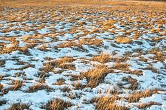 La pampa (jorge VM) Tags: pampa snow patagonia magallanes tierradelfuego outdoor nikon nikond7100 nikonphotography nikkor 35mm