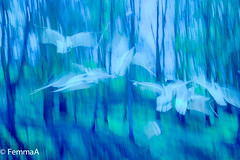 Wingbeats (femmaryann) Tags: wings birds abstract trees forest dreams outdoors movement intentional
