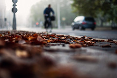 dash (ewitsoe) Tags: leaves sidewalk poznan ewitsoe nikon d80 35mm street urban bokeh poalnd europe autumn fall city lowdof focus