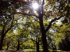 Park (Karenjw) Tags: finsbury finsburypark trees sunray summer green outdoors park london