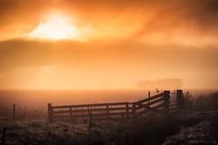 Foggy Sunrise (Anthony Malefijt - www.malefijtfotografie.nl) Tags: holland nederland texel sunrise sun foggy fog mist landscape cityscape orange serene weiland beautiful nikon wwwmalefijtfotografienl