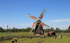 Nederland - Zuid-Holland - Groot-Ammers - De Jonge Sophia -1773 (@-Loes) Tags: mill dutch molen moulin mühlen windmolen mühle molino moinho mulino 磨