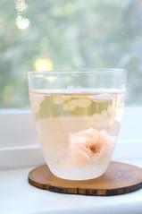 Salted Cherry Blossom Tea (little  lovelies) Tags: japanese salted cherryblossom tea