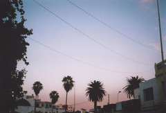 Assilah (90sFlav) Tags: assilah azilah maroc morocco analogue film 35mm analogic rad vibe chill dream sky palm old city rollei xf 35 vintage pastel grunge indie lomo lofi africa cable sunrise sunshine sunset vapor vaporwave aesthetic esthetic smooth feel tanger